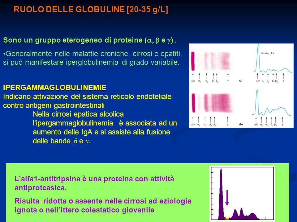 RUOLO DELLE GLOBULINE [20-35 g/L]